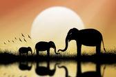 Silueta sloní pozadí světlo ze slunce. — Stock fotografie