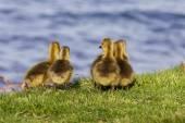 Cute company near the lake — Stock Photo