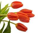 Red tulip flowers on the table, background — Stock Photo