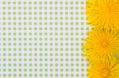 Dandelion flowers on background in green cage — Stock Photo