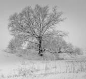 自然黒と白 — ストック写真