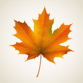 Single  autumn maple leaf — Stock Vector