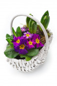 Spring bouquet — Стоковое фото