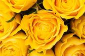 желтые розы фон — Стоковое фото
