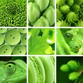 Fauna collage — Stock Photo