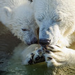 Polar bear with mommy — Stock Photo #61790155
