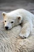 Eisbär mit mom — Stockfoto