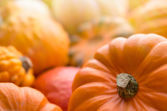 Pumpkins background — Zdjęcie stockowe