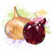 Cebollas frescas — Vector de stock