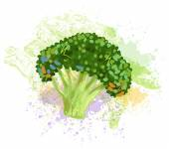 Fresh Broccoli — Stock Vector