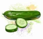 Sliced Cucumber — Stock Vector