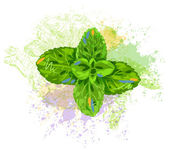 Mint leaves — Stock Vector