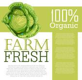 Fresh Cabbage — Stock Vector
