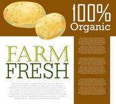 Fresh Potatoes — Stock Vector