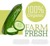 Fresh Cucumber — Stock Vector