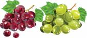 Red and white grapes — Stock Vector