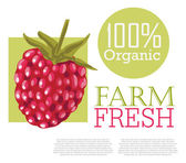 Menu design with Raspberry — Vector de stock