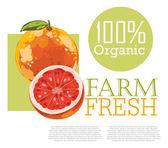 Menu design with Grapefruit — Stock Vector