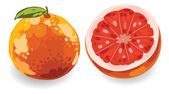 Hand drawn Grapefruit set — Stock Vector