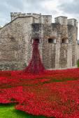 Poppies - art instalation at Tower of London, UK — Zdjęcie stockowe