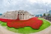 Poppies - art instalation at Tower of London, UK — Stock Photo