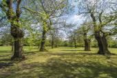 Greenwich park in London UK — Stockfoto