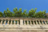 Lemon trees in the episcopal palace in Syracuse — Stock Photo