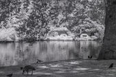 St James Park, London UK - Infrared black and white landscape — Foto de Stock