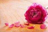 Pink rose petals and rose. — 图库照片