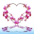 Orchid Flowers heart. — Stockfoto #62809217