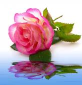 Pink rose and water  reflection. — Stock Photo
