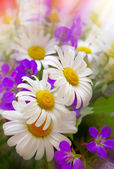 Colorful bouquet of field flowers . — Stockfoto