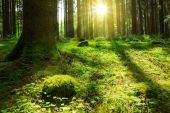 Spring forest and sunshine. — Stock Photo