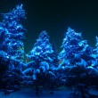 Snow covered Christmas tree lights in a winter forest by night — 图库照片 #63476329