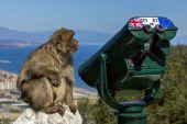 Monkey near the telescope on the background of the bay. Gibralta — Stock Photo