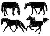 Horses - basic movements — Stock Vector