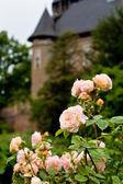 Burg Linn 玫瑰 — 图库照片