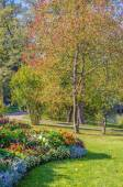 Autumn in the Catherine Park. — Stock Photo