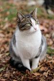 Weiße und graue katze — Stockfoto