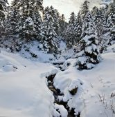 Mountain stream in winter forest covered with snow — Stock Photo