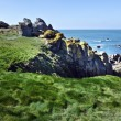 Green grass and Wild coastline in south of Yeu Island — Stock Photo #73537181