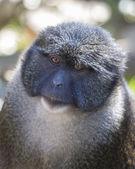 Uzaylılar swamp monkey — Stok fotoğraf