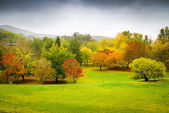 Panorama of autumn trees in Australia — Stock Photo