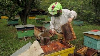 Trabajo de apicultor — Vídeo de stock