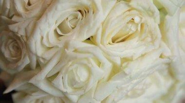 Roses closeup — Stock Video