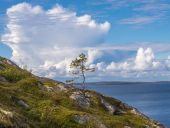 Lonely small pine on the island the German Kuzov, blue sky, clou — Stock Photo
