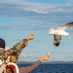 The ship passengers  feeding  seagulls. — Stock Photo #63814493