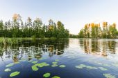 Scenery lake with water lilies at sunset. — Stock Photo