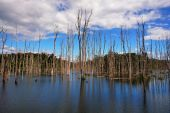Dry Trees in a Lake — Stock Photo