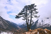 Lonely Tree in the Himalayas — Foto de Stock
